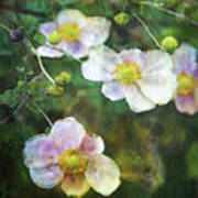Japanese Anemone 4781 Idp_2 Art Print