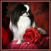 Japanese Chin And Rose Art Print