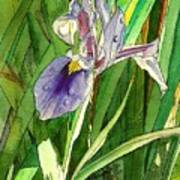 Japanese Iris Art Print