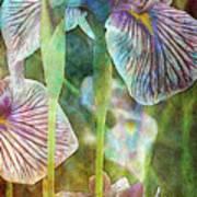 Japanese Iris Tall 2694 Idp_4 Art Print