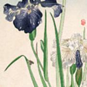 Japanese Irises Art Print