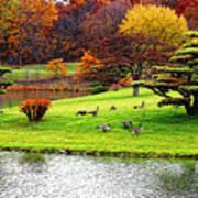 Japanese Island Fall Colors Art Print