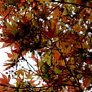 Japanese Maple 2011-1 Art Print