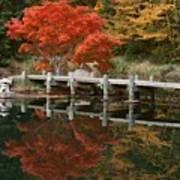Japanese Reflection Art Print