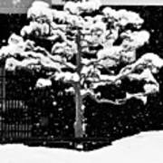 Japanese Tree In The Snow Art Print by Dean Harte