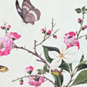 Japonica Magnolia And Butterflies Art Print