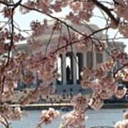 Jefferson Through The Cherry Blossoms Art Print