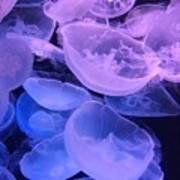Jellyfish #3 Art Print
