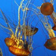 Jellyfish Family Art Print