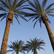 Jerusalem Palms Art Print