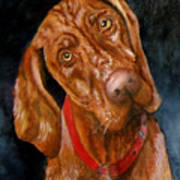 Jesse The Vizsla Art Print