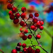 Jessies Berries Art Print