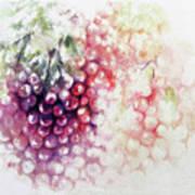Jewels On The Vine Art Print