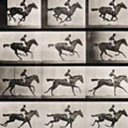 Jockey On A Galloping Horse Art Print