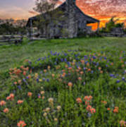 John P Coles Cabin And Spring Wildflowers At Independence - Old Baylor Park Brenham Texas Art Print