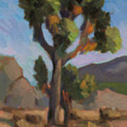 Joshua Tree 2 Art Print