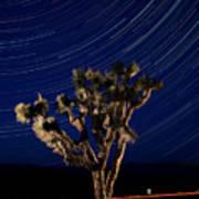 Joshua Tree And Star Trails Art Print by Steve Gadomski