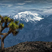 Joshua Tree At Keys View In Joshua Park National Park Art Print