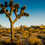 Joshua Tree Panoramic Art Print