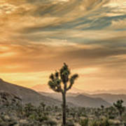 Joshua Tree Sunrise Art Print