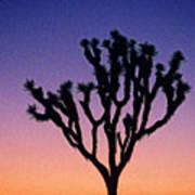 Joshua Tree With Special Effects Art Print