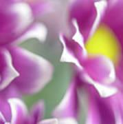 Joyful Sisters. Gentle Floral Macro Art Print
