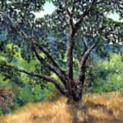 Juan Bautista De Anza Trail Oak Art Print