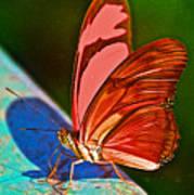 Julia Heliconian Butterfly In Iguazu Falls National Park-brazil Art Print