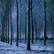 Jungle Trees In Blue  Art Print