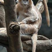 Jungle World Monkey2 Art Print