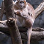 Jungle World Monkey3 Art Print