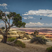 Juniper Tree On A Mesa Art Print