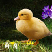 Just Ducky Art Print