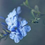 Just Feeling Blue Art Print