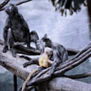 Just Monkeying Around Art Print