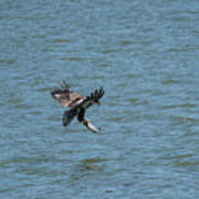 Juvenile Eagle Fishing Pickwick Lake Tennessee 031620161318 Art Print
