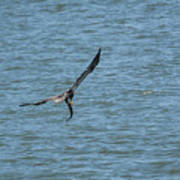 Juvenile Eagle Fishing Pickwick Lake Tennessee 031620161330 Art Print