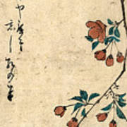 Kaido Ni Shokin - Small Bird On A Branch Of Kaidozakura Art Print