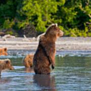Kamchatka Brown Bear Art Print