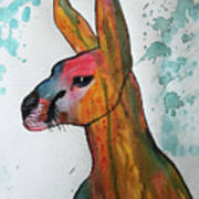 Kangaroo Water Art Print