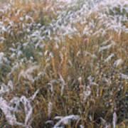 Kans Grass In Mist Art Print