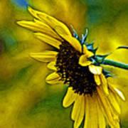 Kansas Sunflower Art Print