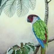 Kasanga Bajo El  Guarumo Art Print