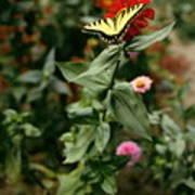 Kathy's Butterfly Art Print