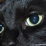 Katy - The Eyes Have It Art Print