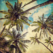 Kauai Island Palms - Blue Hawaii Photography Art Print