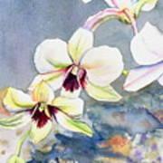 Kauai Orchid Festival Art Print