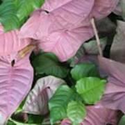 Kauai  Pinks Art Print