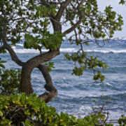 Kauai Shores Art Print