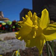 Kayak Launch Daffodil Cambridge Ma Art Print